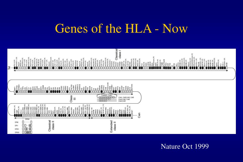 Genes of the HLA - Now