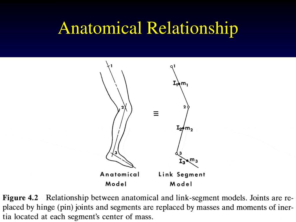 Anatomical Relationship