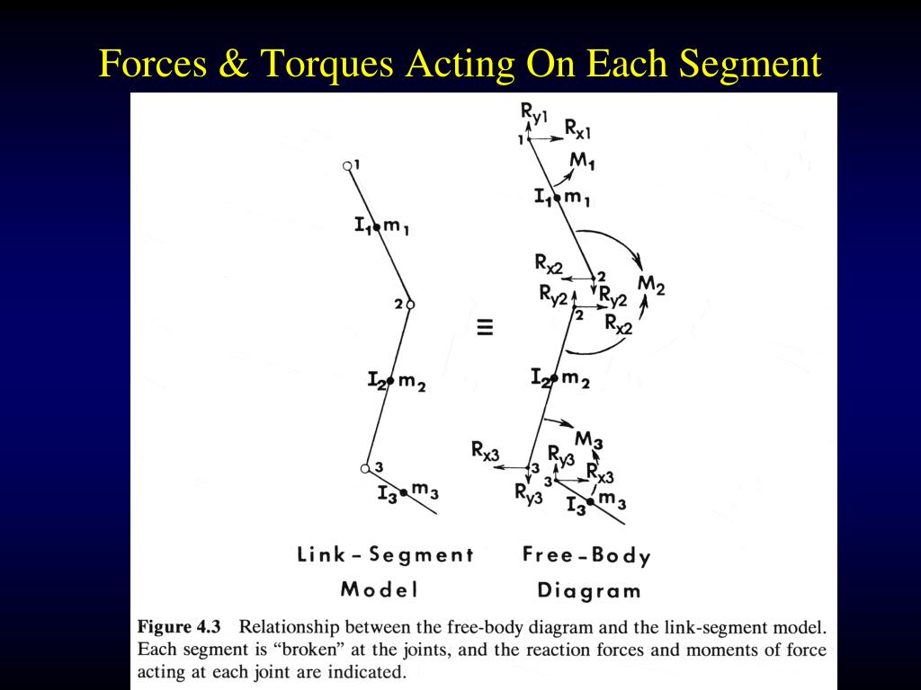 Forces & Torques Acting On Each Segment