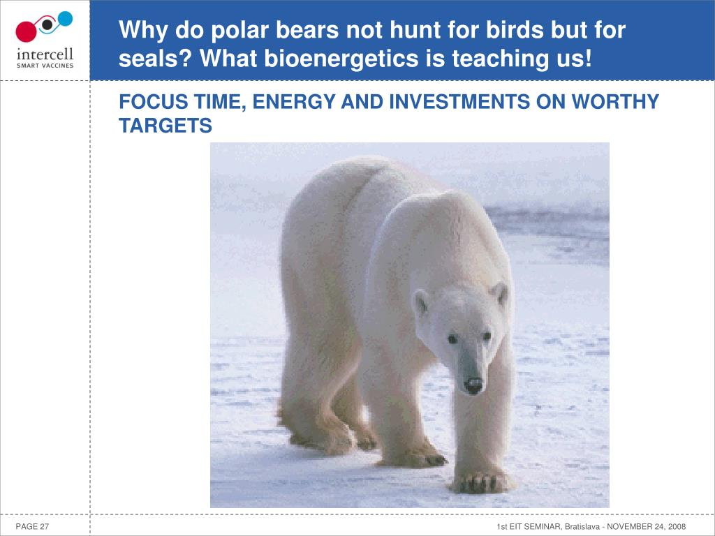 Why do polar bears not hunt for birds but for seals? What bioenergetics is teaching us!