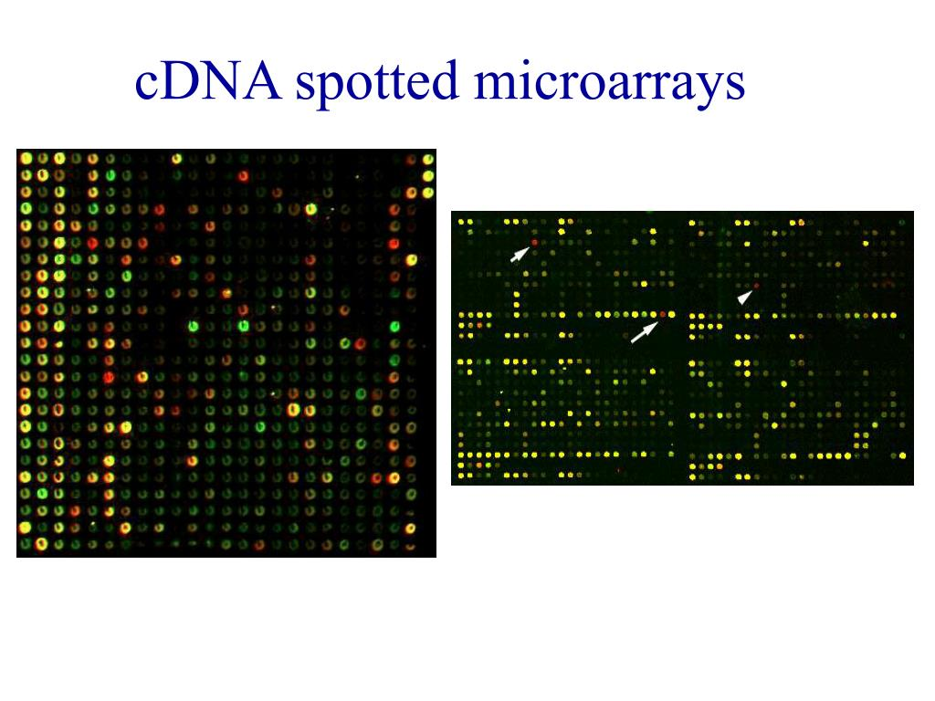 cDNA spotted microarrays