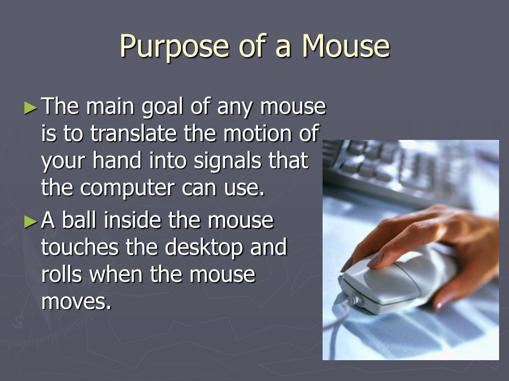 Purpose of a Mouse