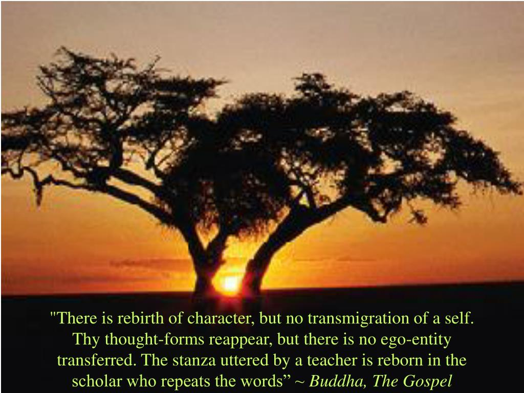 """There is rebirth of character, but no transmigration of a self. Thy thought-forms reappear, but there is no ego-entity transferred. The stanza uttered by a teacher is reborn in the scholar who repeats the words"" ~"