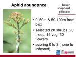 aphid abundance