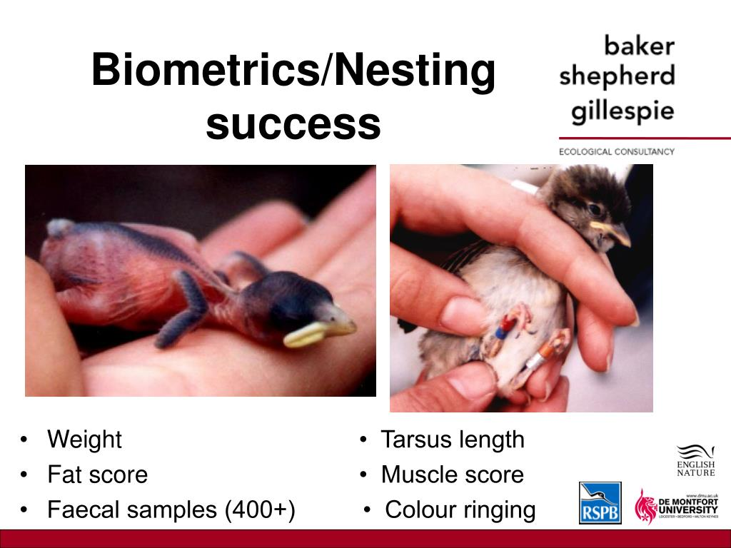 Biometrics/Nesting success