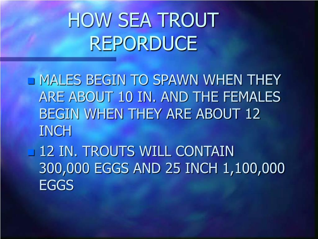 HOW SEA TROUT REPORDUCE