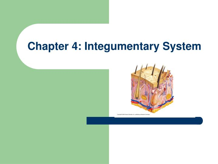 Chapter 4 integumentary system l.jpg