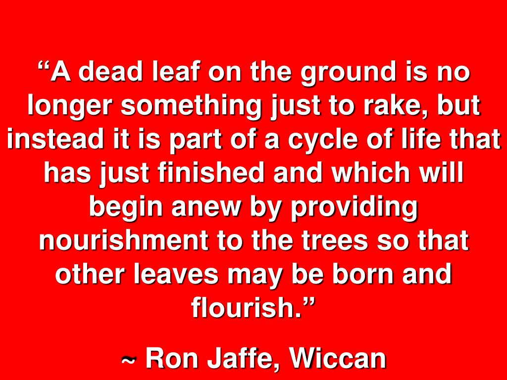"""""""A dead leaf on the ground is no longer something just to rake, but instead it is part of a cycle of life that has just finished and which will begin anew by providing nourishment to the trees so that other leaves may be born and flourish."""""""