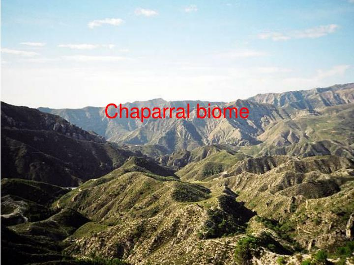 PPT - Chaparral biome PowerPoint Presentation - ID:765163