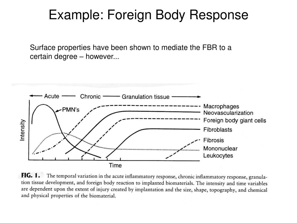 Example: Foreign Body Response