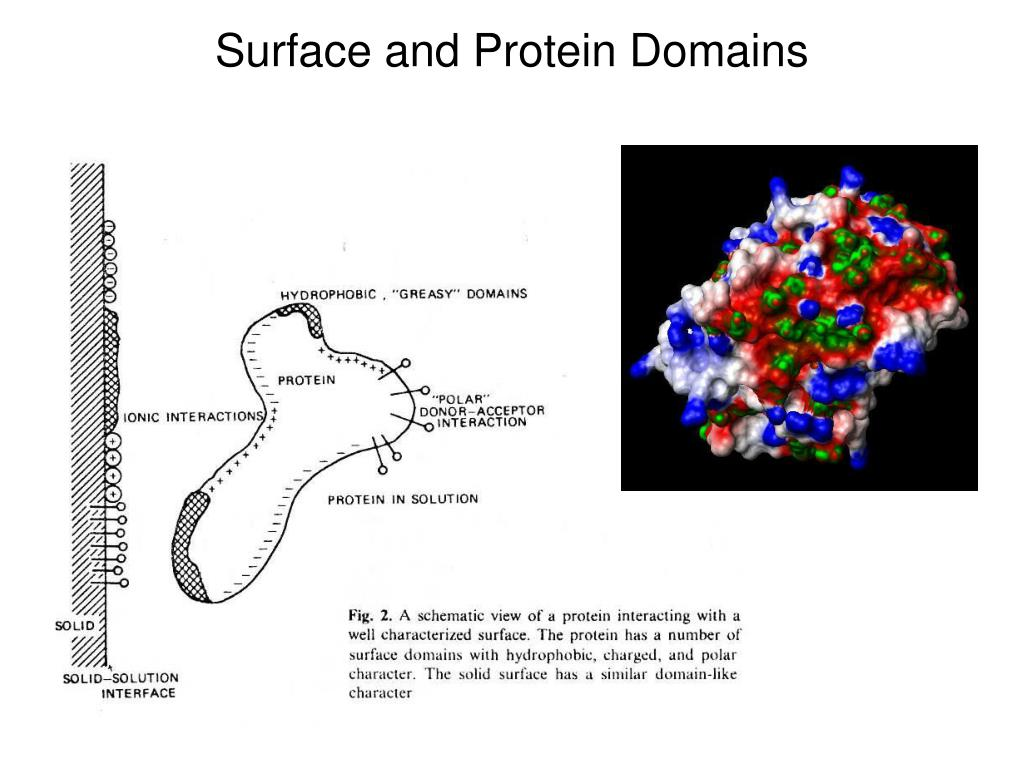 Surface and Protein Domains