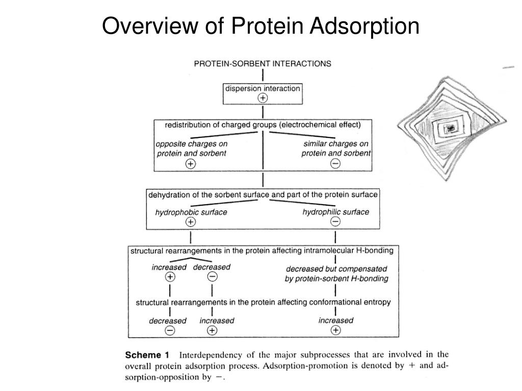 Overview of Protein Adsorption