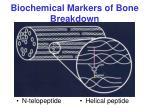 biochemical markers of bone breakdown