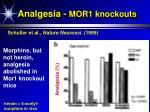 analgesia mor1 knockouts