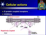cellular actions