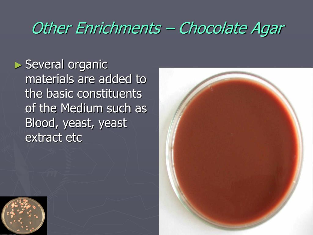 Other Enrichments – Chocolate Agar