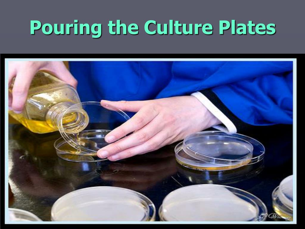 Pouring the Culture Plates