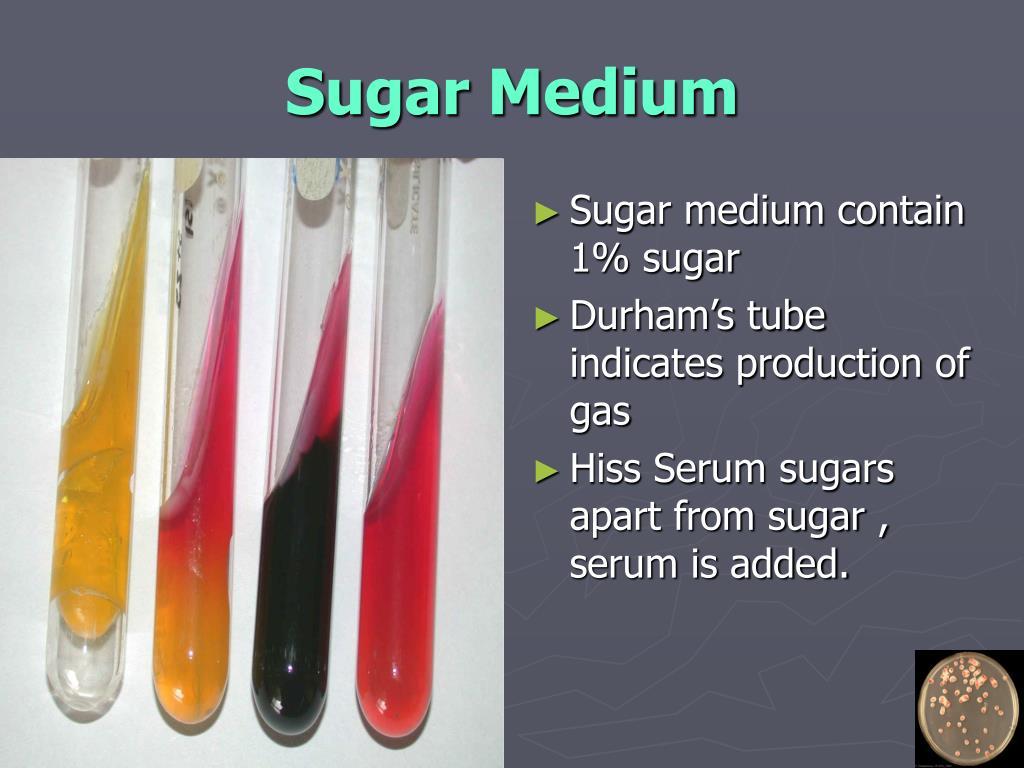 Sugar Medium