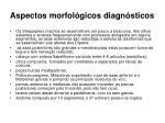 aspectos morfol gicos diagn sticos