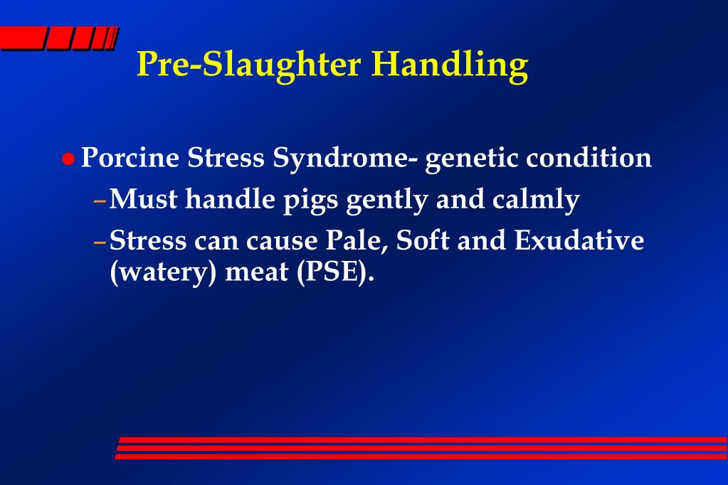 Porcine Stress Syndrome- genetic condition