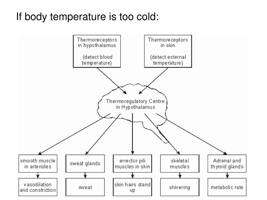 If body temperature is too cold: