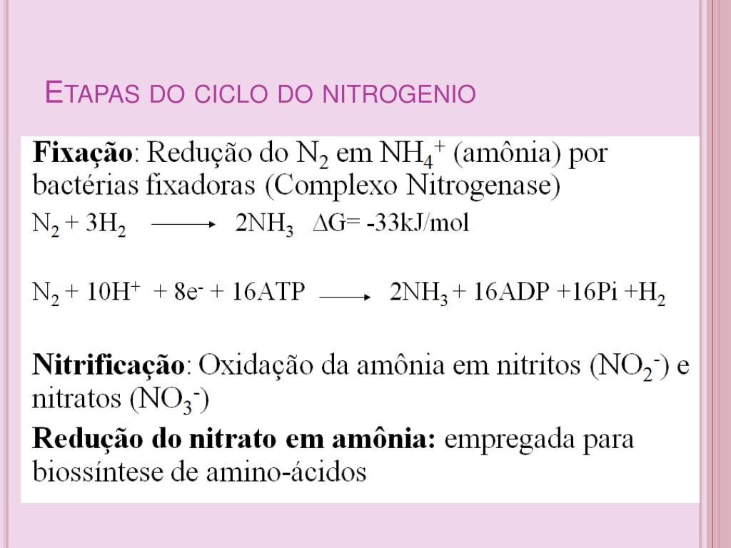 Etapas do ciclo do nitrogenio