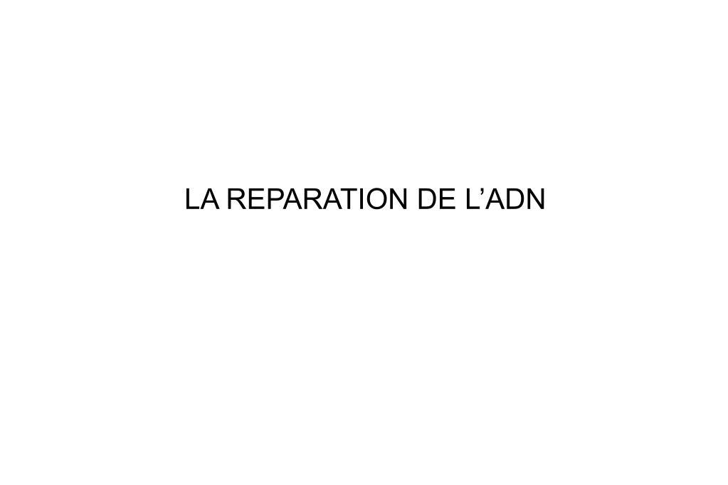 LA REPARATION DE L'ADN
