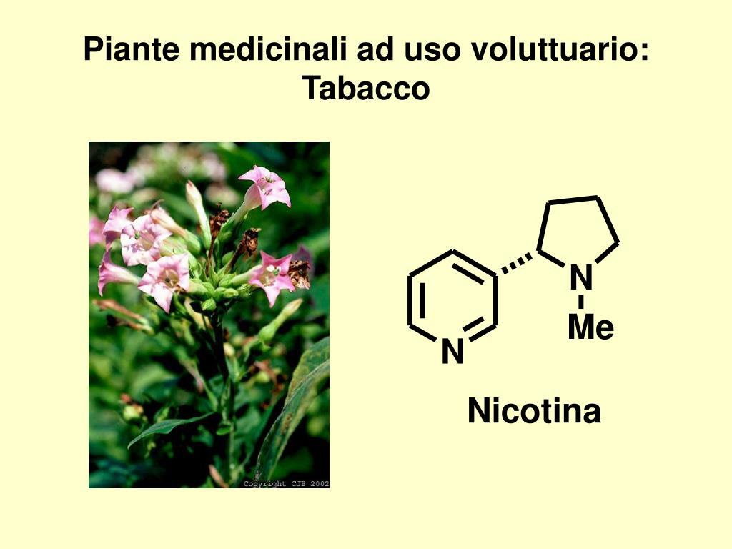 PPT - Cannabis Ricreazionale e Cannabis Medicinale. Basi Molecolari della Dif...