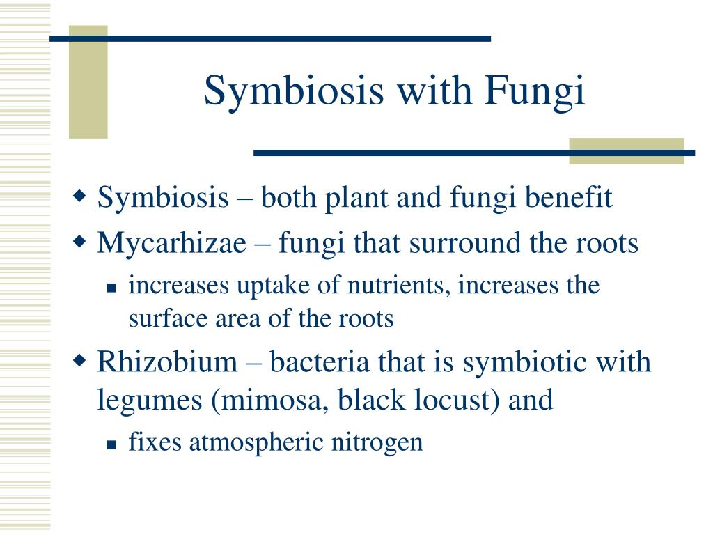 Symbiosis with Fungi