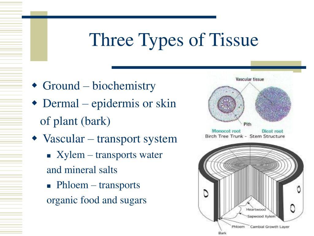 Three Types of Tissue