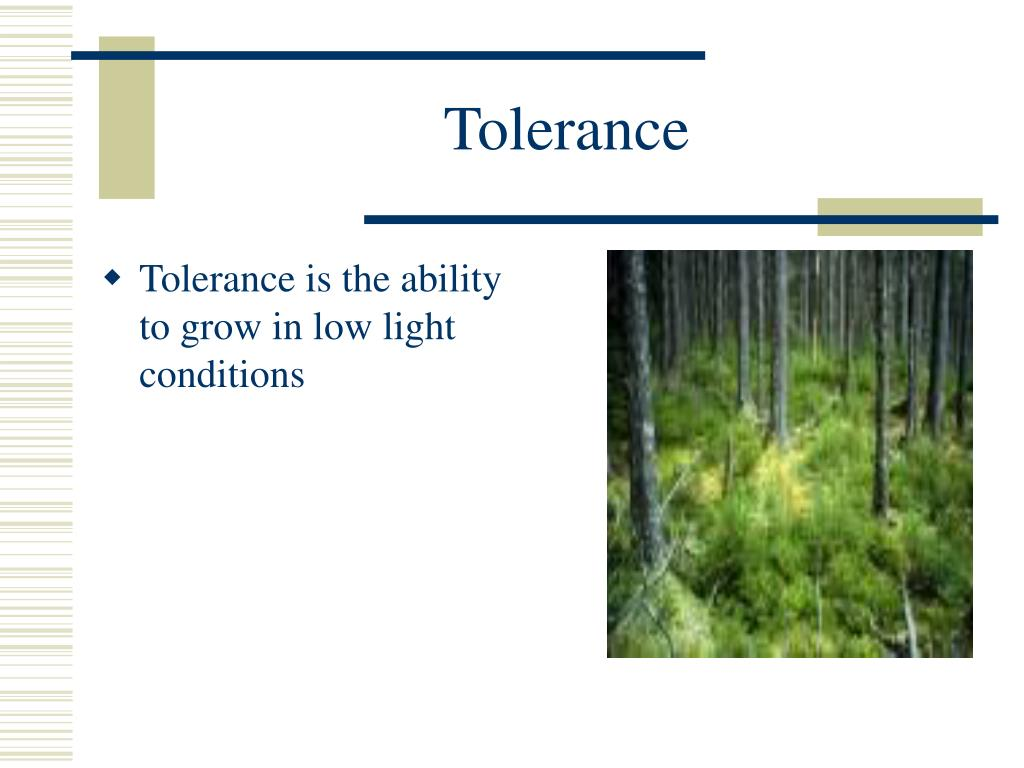 Tolerance is the ability to grow in low light conditions
