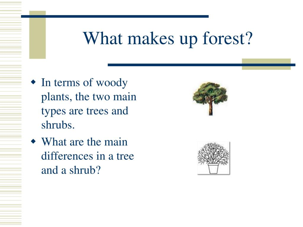 In terms of woody plants, the two main types are trees and shrubs.