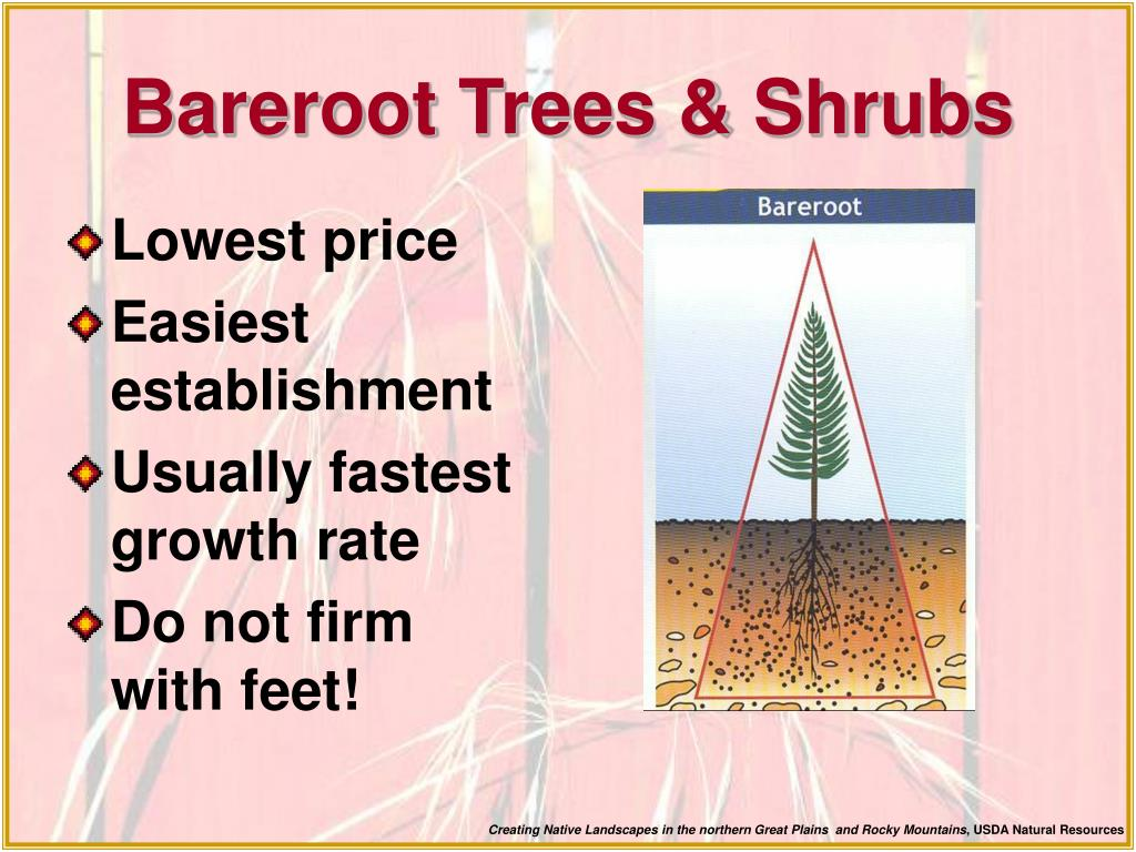 Bareroot Trees & Shrubs
