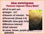 blue switchgrass panicum virgatum heavy metal