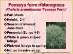 feeseys form ribbongrass phalaris arundinacea feeseys form