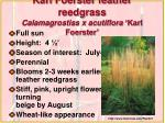 karl foerster feather reedgrass calamagrostiss x acutiflora karl foerster