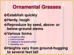 ornamental grasses21