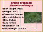 prairie dropseed sporobolus heterolepsis