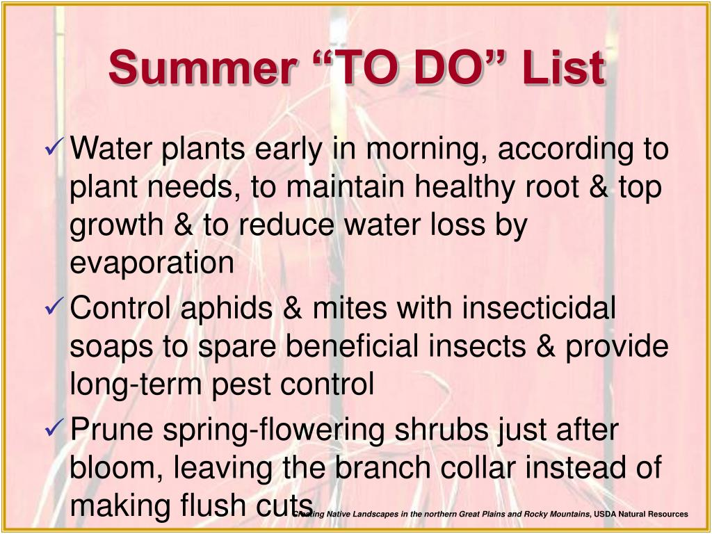 "Summer ""TO DO"" List"