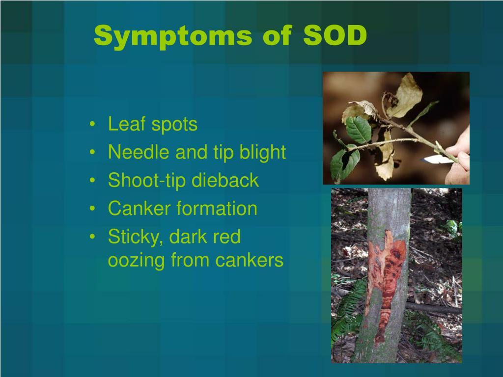 Symptoms of SOD