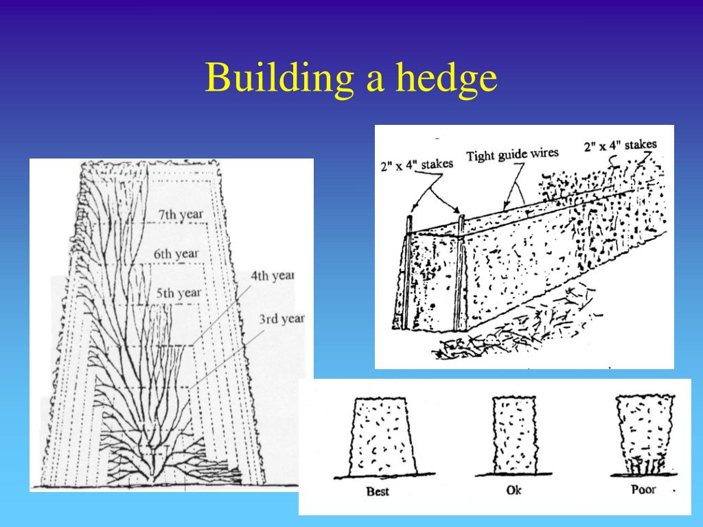 Building a hedge