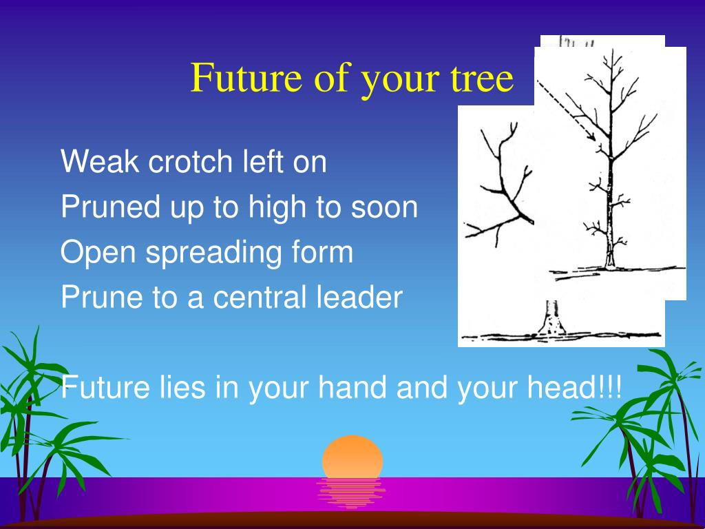 Future of your tree
