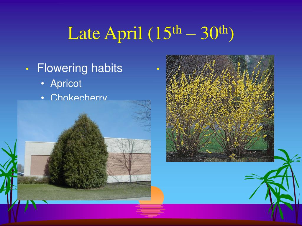 Flowering habits