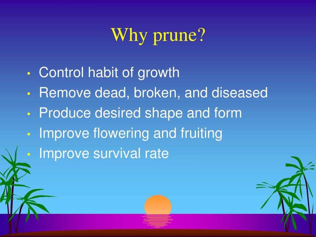 Why prune?