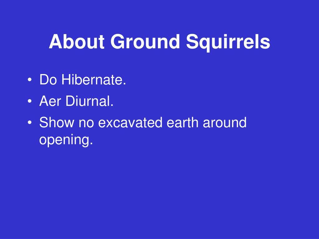 About Ground Squirrels
