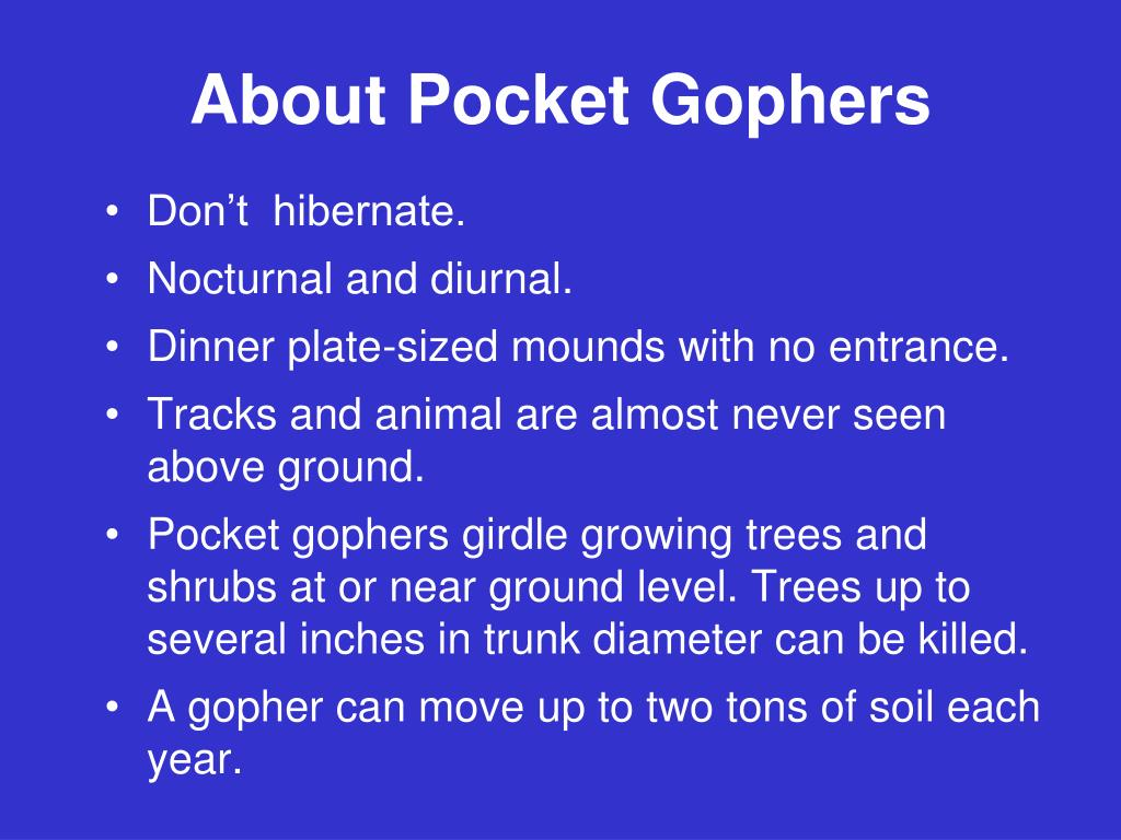 About Pocket Gophers