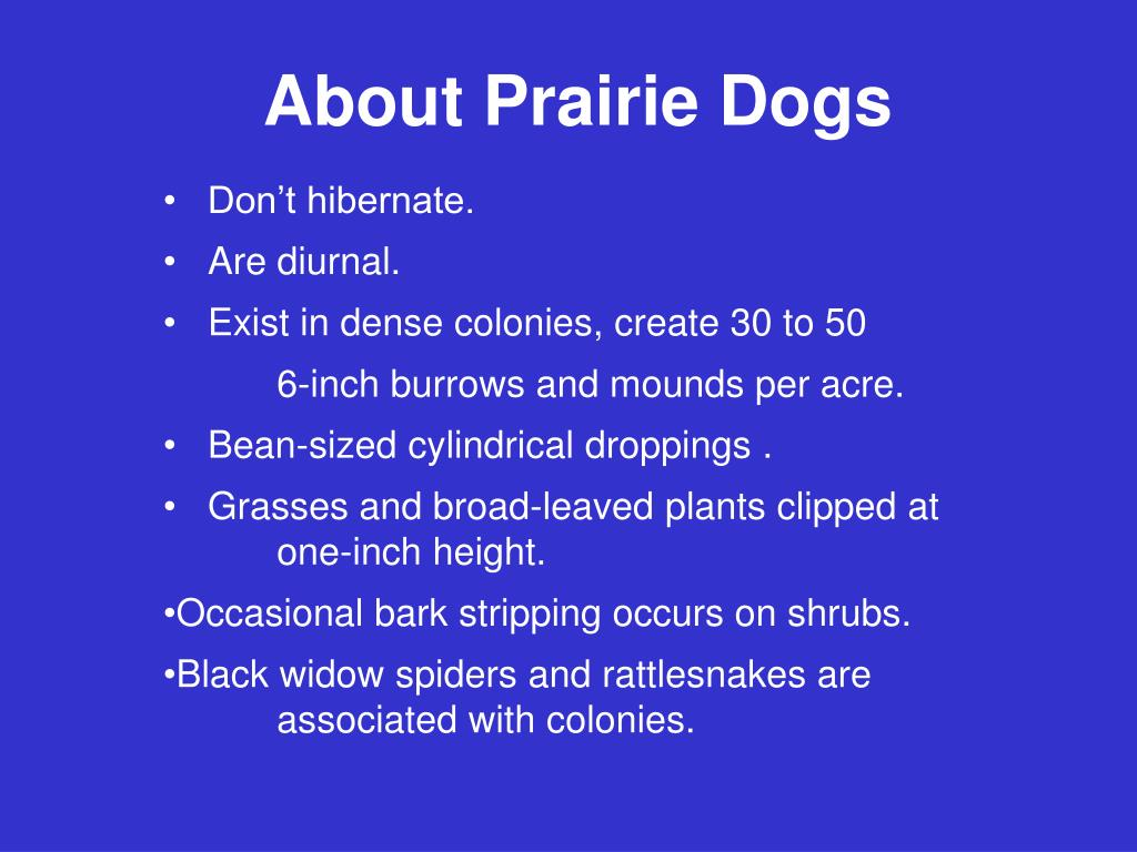 About Prairie Dogs