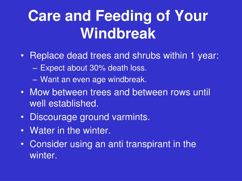 Care and Feeding of Your Windbreak