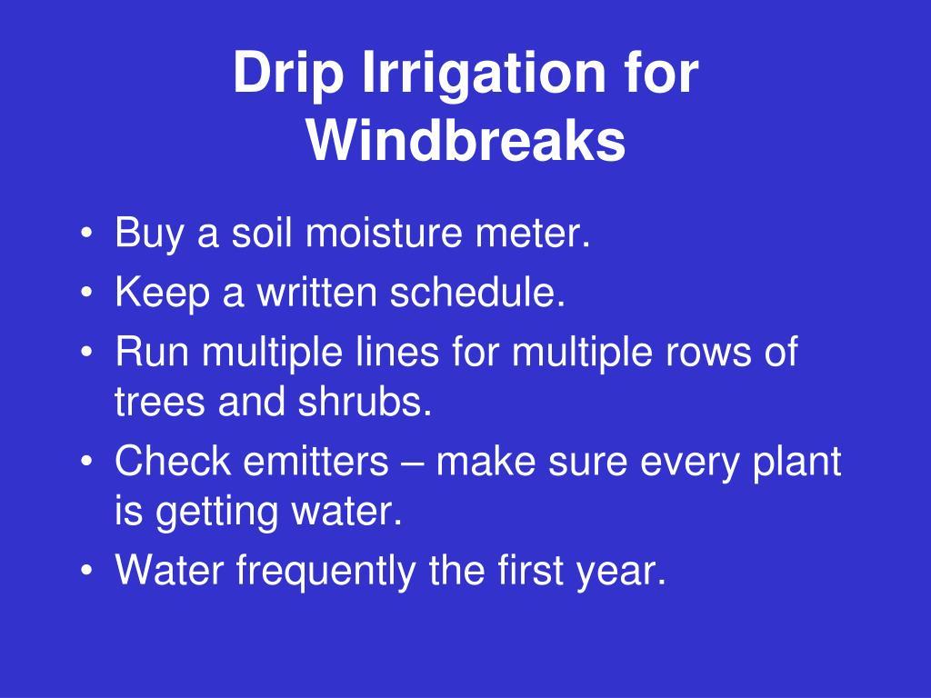 Drip Irrigation for Windbreaks