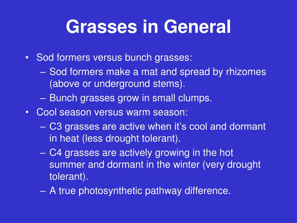 Grasses in General